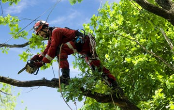 find trusted rated Hastings tree surgeons