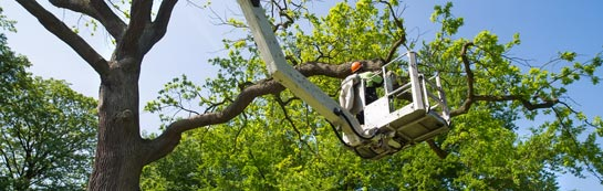 Hastings tree surgery services