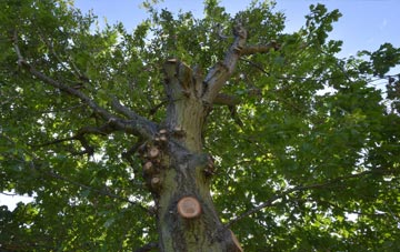 what is Hastings tree surgery?