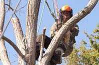 Hastings tree surgeon services